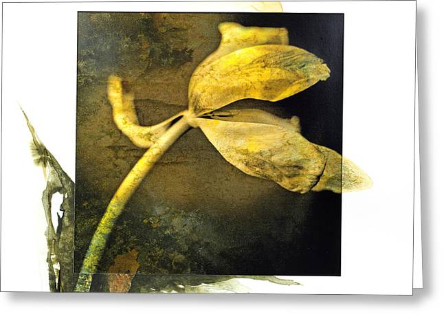 Tulip On A Textured Brown Background. Greeting Card by Bernard Jaubert