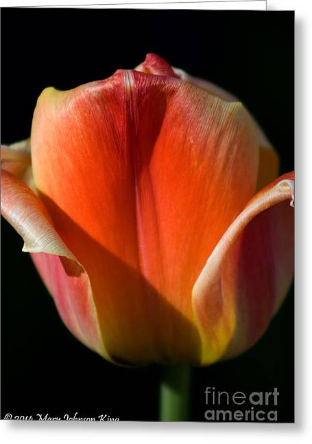 Tulip On Black Greeting Card