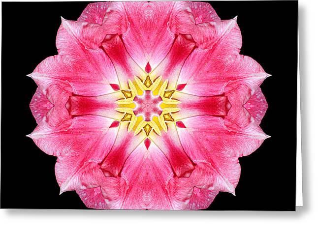 Tulip Peach Blossom IIi Flower Mandala Greeting Card by David J Bookbinder