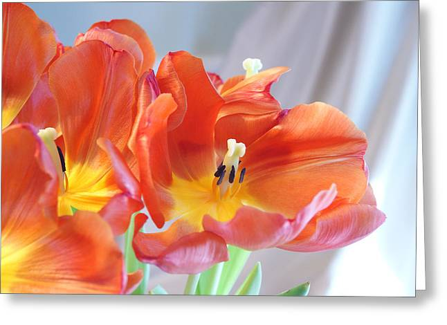 Tulip Profusion Greeting Card