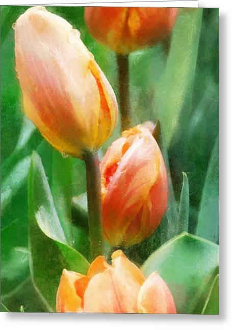 Tulip Quartet Greeting Card by Francesa Miller