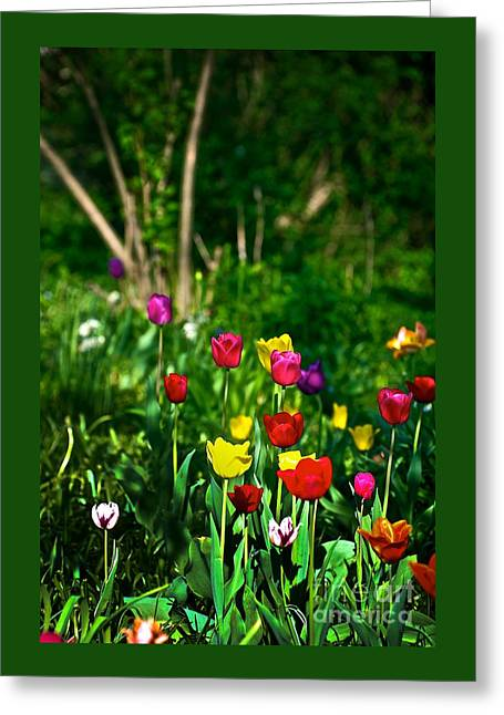 Tulip Rainbow Greeting Card