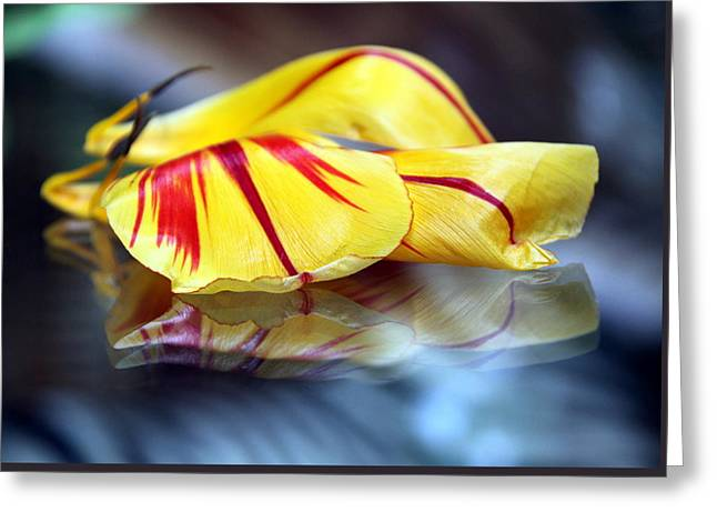 Tulip Reassembled 4 Greeting Card by  Andrea Lazar