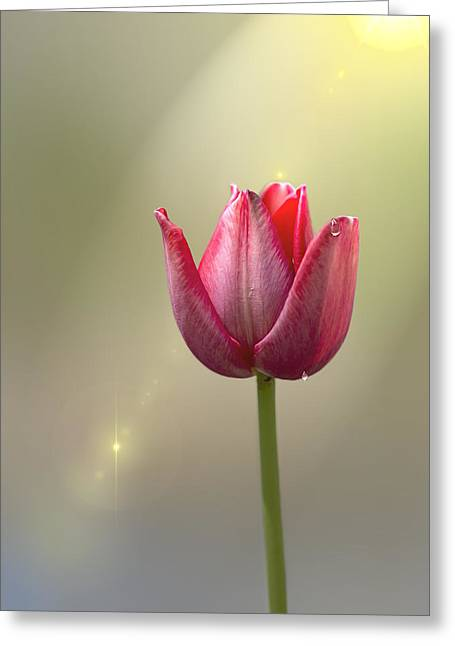 Tulip Stands Alone Greeting Card by Bill Tiepelman
