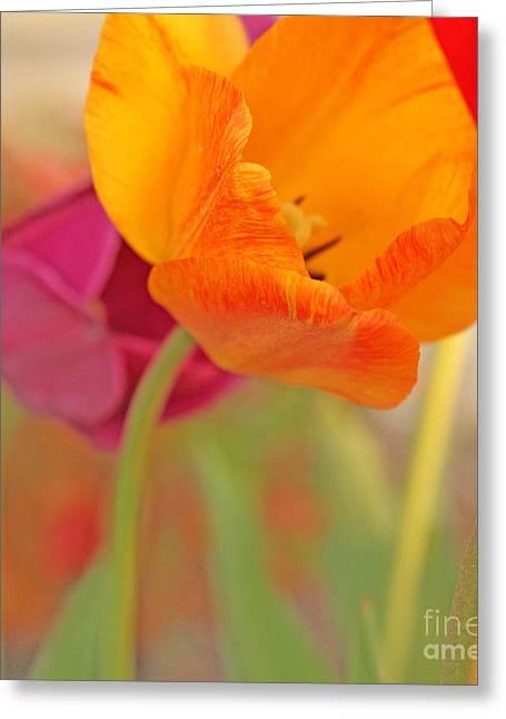 Tulip Time Greeting Card