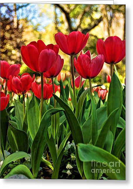 Tulip Time Greeting Card by Peggy Hughes