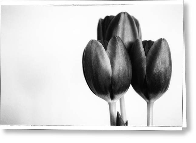 Tulip Trio Greeting Card by Shelly Gunderson