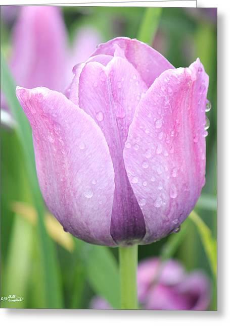 Tulip Weeps Greeting Card