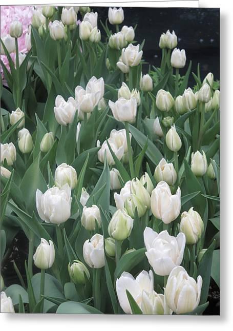 Tulip White Show Flower Butterfly Garden Greeting Card by Navin Joshi