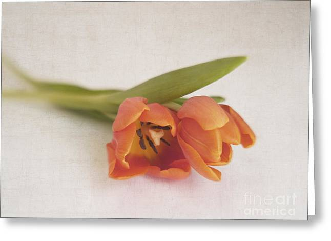 Tulipa Duo Greeting Card by Irina Wardas