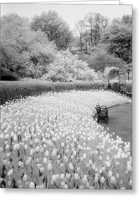 Tulips And Bench II Greeting Card