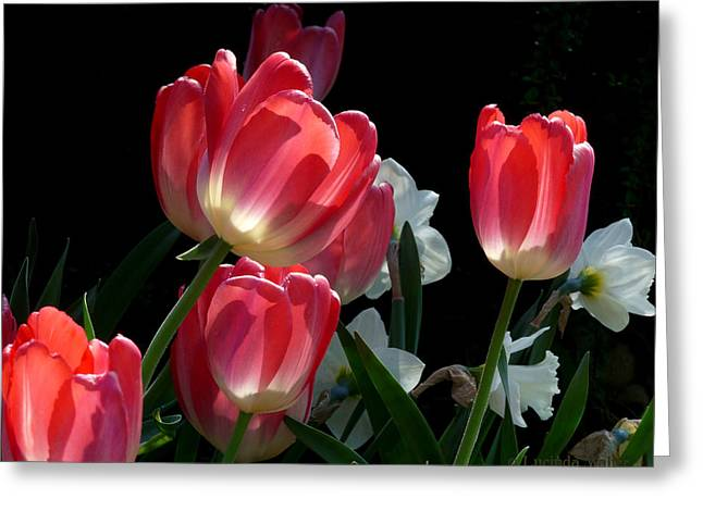 Greeting Card featuring the photograph Tulips And Daffodils by Lucinda Walter
