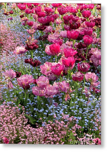 Tulips And Forget-me-nots Greeting Card by Frank Townsley