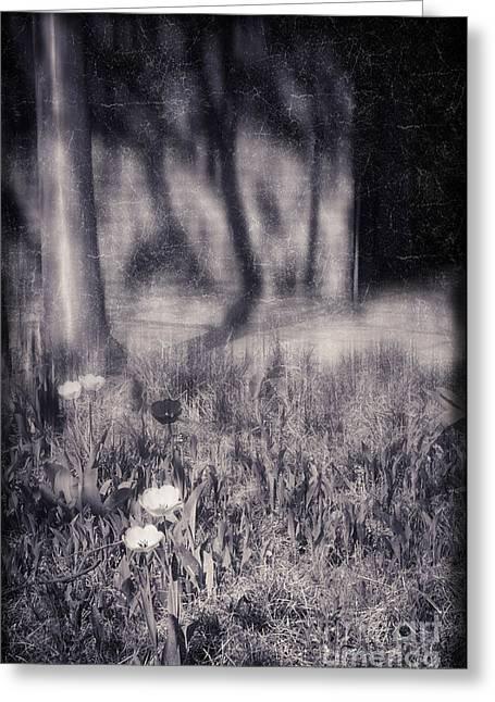 Tulips And Tree Shadow Greeting Card by Silvia Ganora