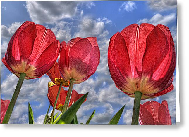 Tulips Are Better Than One Greeting Card
