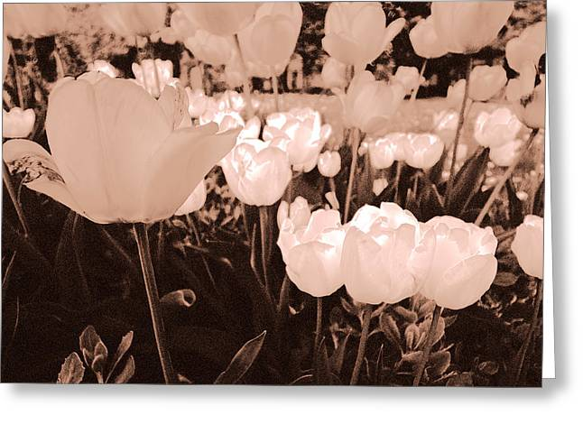 Greeting Card featuring the photograph Tulips by Arkady Kunysz