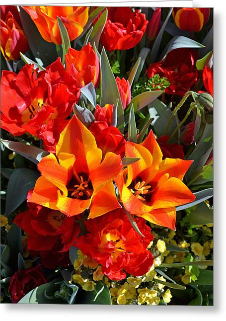 Tulips At The Pier Greeting Card