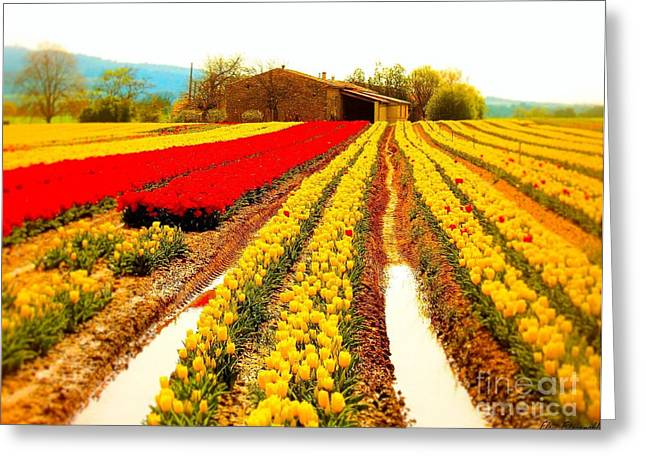 Tulips Field In Provence By A Farm Stone House France Greeting Card by Flow Fitzgerald