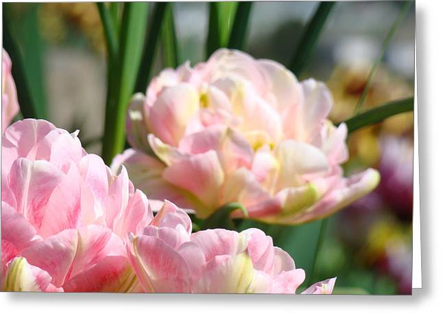 Tulips Flowers Garden Art Prints Pink Tulip Floral Greeting Card by Baslee Troutman