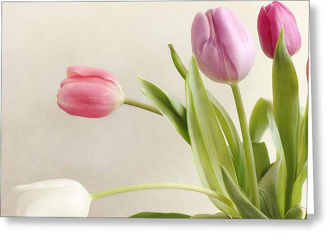 Tulips Greeting Card by LHJB Photography