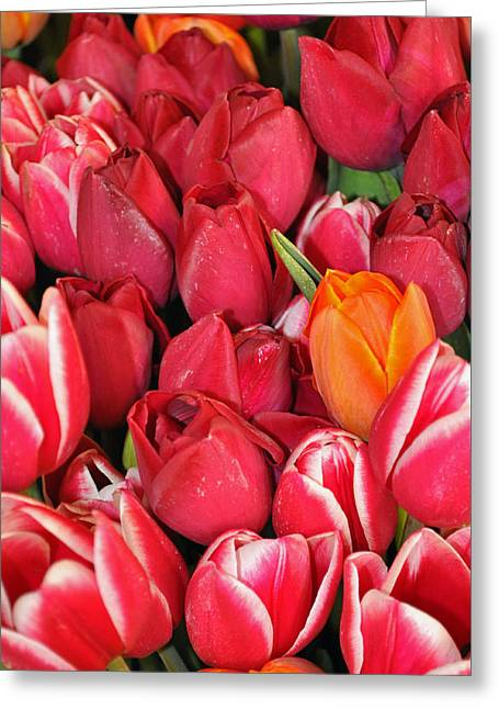 Tulips In Pike Place Market Greeting Card
