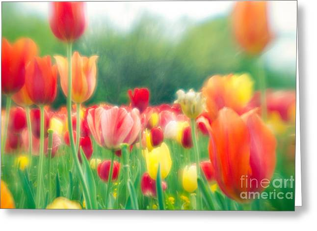 Tulips In Spring Greeting Card by Sonja Quintero