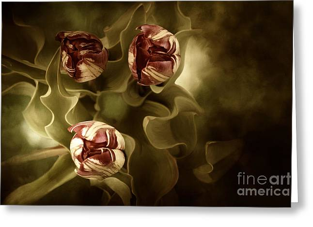 Tulips In The Mist II Greeting Card