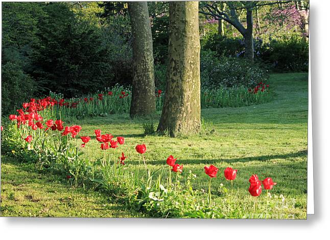 Greeting Card featuring the photograph Tulips In The Park by Jose Oquendo