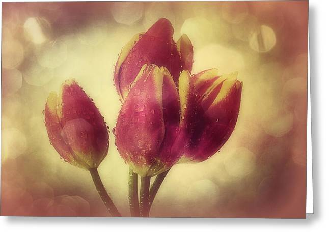 Tulips In The Rain Greeting Card by Anne Macdonald