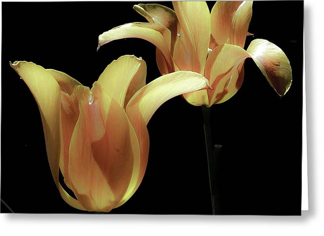 Tulips In Vaerebro Greeting Card by Michael Canning