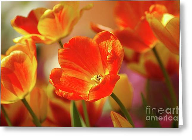 Tulips Greeting Card by Kathleen Struckle