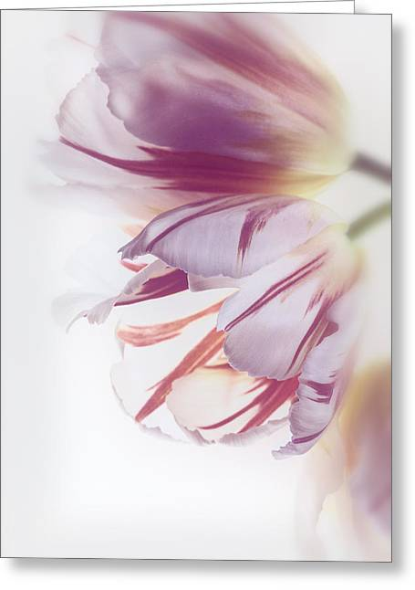 Tulips Greeting Card by Kim Aston