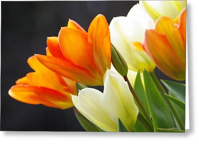 Greeting Card featuring the photograph Tulips by Marilyn Wilson