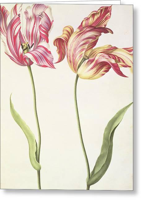 Tulips Greeting Card by Nicolas Robert