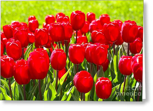 Tulips Greeting Card by Nur Roy