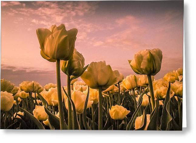 Tulips On A Pink Sky Greeting Card by Yvon van der Wijk