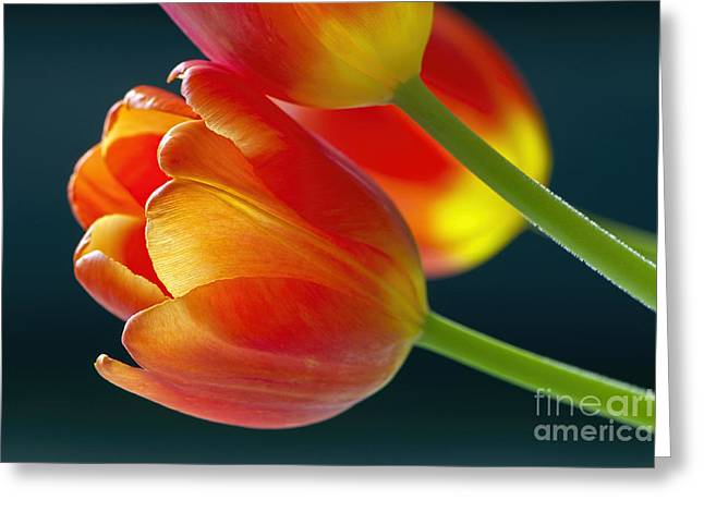Tulips On Black 2a Greeting Card by Sharon Talson