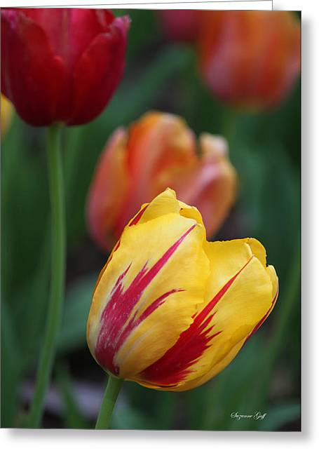 Tulips On Fire II Greeting Card by Suzanne Gaff