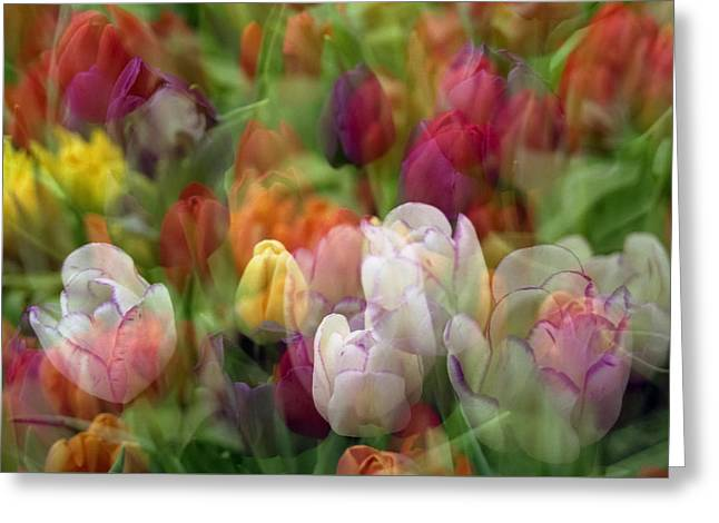 Tulips Greeting Card by Penny Lisowski