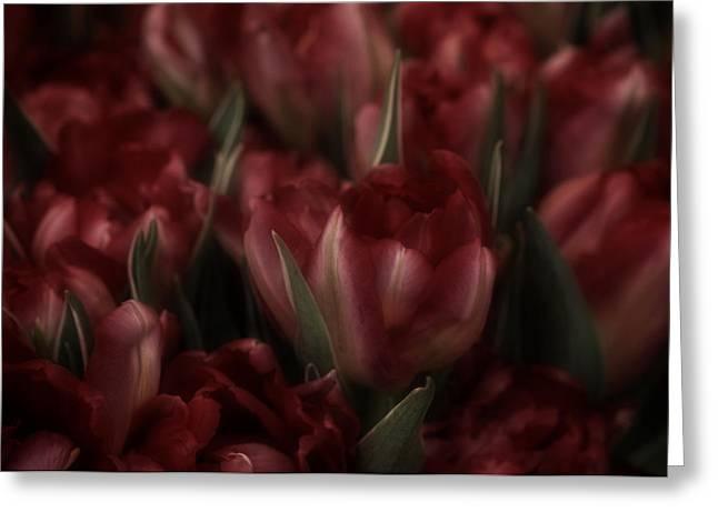 Tulips Romantic Greeting Card