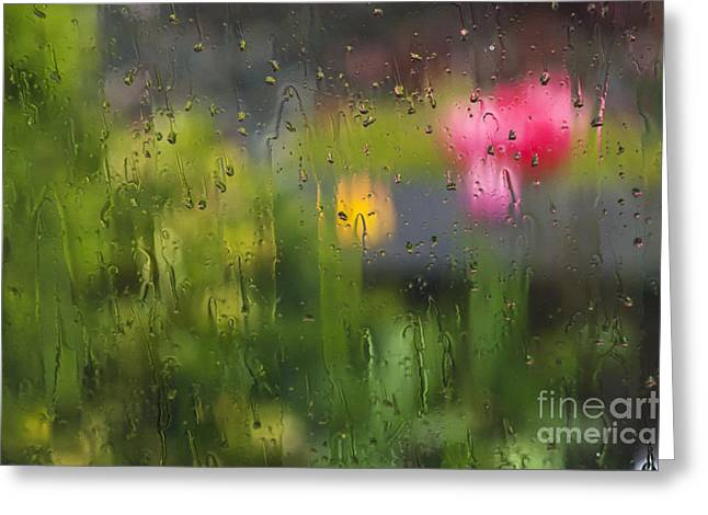 Tulips Through The Rain Greeting Card