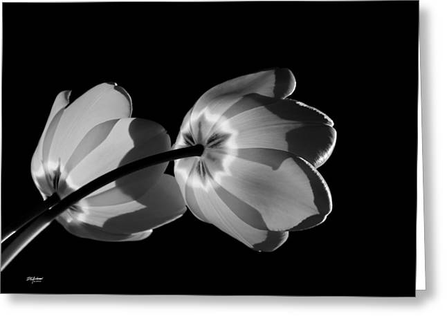 Tulips Tipping To The Sun Greeting Card
