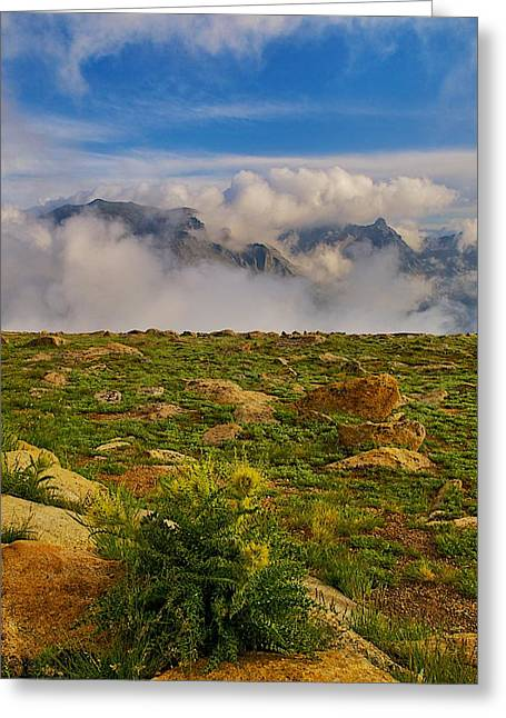 Tundra Delight Greeting Card by Rob Wilson