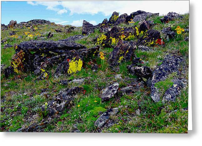 Tundra Yellows Greeting Card