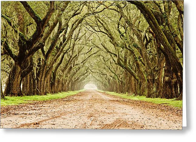 Tunnel In The Trees Greeting Card