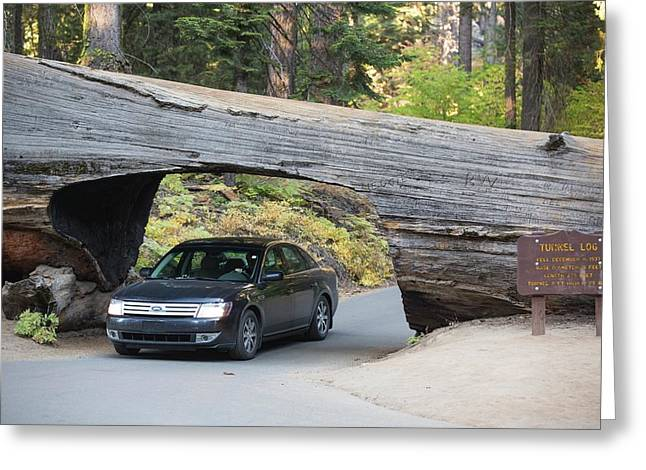 Tunnel Log A Fallen Giant Redwood Greeting Card