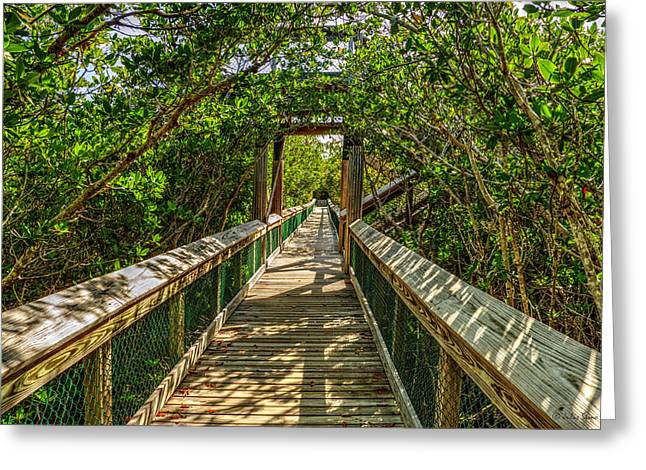 Tunnel Of Mangrove Green Greeting Card