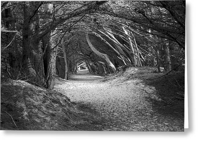 Tunnel To The Dunes In Black Greeting Card