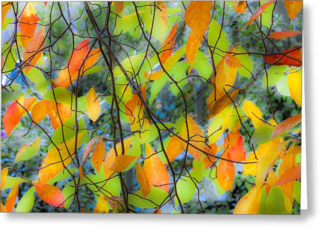 Tupelo Tapestry - Glowing Leaves Greeting Card by Saxon Holt