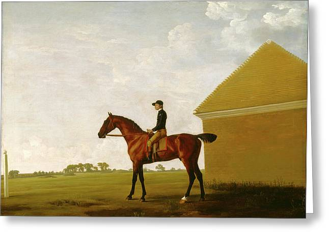 Turf, With Jockey Up, At Newmarket Portrait Of Turf Greeting Card by Litz Collection